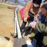 羊に餌やり体験!